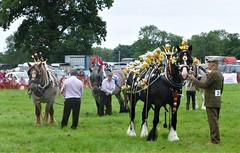 Best Dressed Cart Horse (Paul Thackray) Tags: yorkshire northyorkshire ryedale welburnpark ryedaleagriculturalshow nikond3300 2017