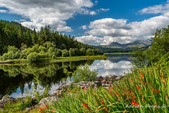 Snowdonia Lake Wales (Adrian Evans Photography) Tags: conwy capelcurig snowdonia calm nature lake wales summer lakeside lynnaumymbyr northwales snowdonsummit sky cribgoch riverbank canoe welshlandscape landscape snowdonianationalpark snowdonhorseshoe landmark reflections outdoor mymbyrlake calmwater snowdonmassif clouds bluesky green british coastline trees rocks flowers forest watersedge redflowers snowdon gwynedd adrianevans llynnaumymbyr uk mountain nikon 20mm