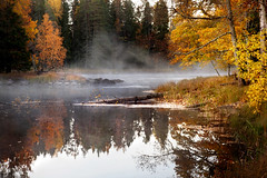 Early morning at the river. (BirgittaSjostedt_away until 24 February) Tags: autumn fall landscape river forest tree hazed fog darkness outdoor scene reflections morning light red yellow leaves sweden birgittasjostedt