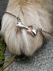 Bling bling (evakongshavn) Tags: smileonsaturday blingbling hsos sos closeup macroshot dog dogs paw bestdogever jewelry silver jewels grass animal
