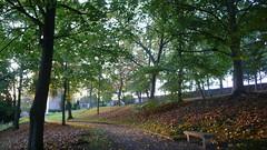 Oissel -  Soleil d'automne (jeanlouisallix) Tags: oissel seine maritime haute normandie france parc jardin parks nature plantes paysage landscape panorama automne