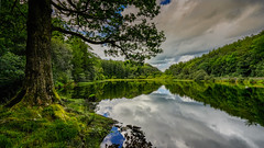 Welcome to The Shire (SpectrumLight) Tags: landscape waterscape lake lakedistrict cumbria reflections clouds nature tree moss green scenic sonya7ii sony fe1635mmf4zaoss ilce7m2 water ng travel tarn yewtreetarn shire tolkien