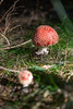 muchomory (PanMajster) Tags: muchomor czerwony amanita muscaria red toadstool mushroom grzyb pentax k3 ii k3ii sigma 1835 18 forest las mountains góry
