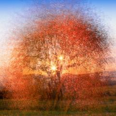 Wild cherry tree (Rita Eberle-Wessner) Tags: multipleexposure mehrfachbelichtung kirsche kirschbaum cherrytree wildcherrytree art artistic blendenstern sonnenstern landschaft landscape digitalart sunstar starburst