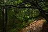 The path_ 2 (fede.piste) Tags: forest rain italy abetone colors sony alpha 6000 path water bosco landschaft landscape