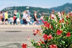 Passeggiando tra i fiorellini (sirio174 (anche su Lomography)) Tags: fiori fiorellini turisti tourists lungolago promenade lago lake como italia italy flowers