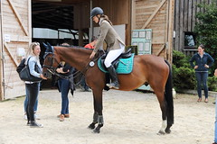 _MG_5791 (dreiwn) Tags: ridingarena reitturnier reiten reitplatz reitverein reitsport ridingclub equestrian showjumping springreiten horse horseback horseriding horseshow pferdesport pferd pony pferde tamronsp70200f28divcusd
