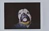 Bulldog (ricko) Tags: lomoinstant film scan mask fallroidweek2017 selfportrait 288365 2017 fujifilminstax