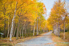 """'TAKE A WALK ON THE AUTUMN SIDE"""" (Wade.J.) Tags: autumn fall colour colours tree trees country walk leaves roadway dog gander newfoundland"""