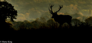 Silhouetted Stag Walking Into The Valley!