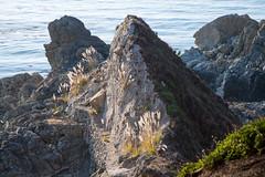untitled-10.jpg (mat3o) Tags: ca trees hike waterfall mcwaybeach bigsur trail redwoods ewoldsentrail route1 coast california pch