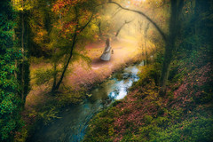 The girl in the forest (RoCafe Off for a while) Tags: forest autumn trees stream river girl ps photomanipulation photoshop fantasy whimsical mysterious nikkor2470f28 nikond600