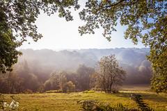 Misty Morning View (Duivelsberg, the Netherlands) (Renate van den Boom) Tags: 09september 2017 boom bos duivelsberg europa gelderland jaar landschap maand mist natuur nederland renatevandenboom weer zon