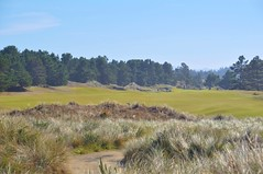 43 (bigeagl29) Tags: pacific dunes golf course bandon resort oregon or coastline beach landscape scenic scenery