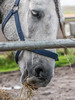 Hayday (Maarten Baars) Tags: panasonic gx80 45150mm f4056 horse horses animal animals dier dieren paard paarden