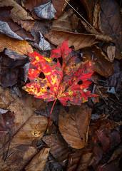 Fall! (Karol A Olson) Tags: swallowfallsstatepark woods forest fall oct17 oakland maryland park