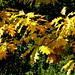 hojas de roble en otoño