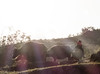 Boy Backwards on Buffalo (Sean Tbear) Tags: vietnam buffalo water waterbuffalo child children boy ride riding animal animals rural farm farming farmer south east asia sea terraces field fields ray sun sunset evening sean thibert horn horns wildlife