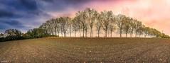 panorama Automne (ΨᗩSᗰIᘉᗴ HᗴᘉS +42 000 000 thx) Tags: flawinne namur belgium belgique panorama arbre tree autimne autumn sky clouds europa hensyasmine concordians