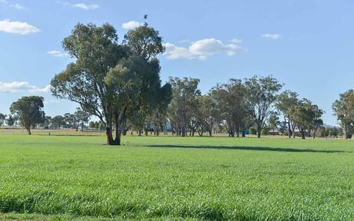 1009 Wallamore Road, Tamworth NSW