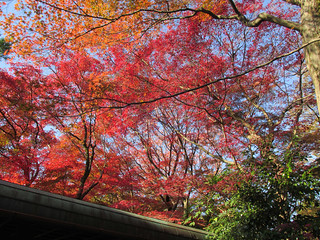 2297 Red Canopy