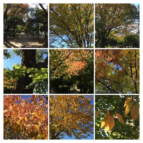 秋色のコラージュ