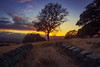 Don't put your camera away (Juan Pablo J.) Tags: clouds california color canon5dmkii canon24105mmf4l landscapes landscape tree textured sunset sky sunsetmadness