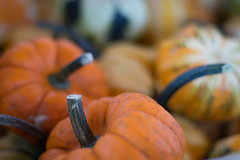 Fall is in the Air (hmthelords) Tags: autumn food pumpkin roadsidestand farm gourds fresh fall countryliving country activeassignmentweekly atmosphericshots