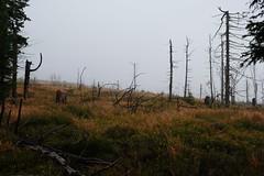 DSCF4627 (Jakub Lewandowski) Tags: beskidy babia góra mountains poland polska jesień automn