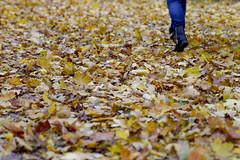 Autumn Ground (CoolMcFlash) Tags: autumn leaf leaves ground nature person walking legs colors fall herbst herbstlich herbstfarben farben laub blätter strase boden gehen beine bunt fotografie photography copyspace negativespace canon eos60d tamron a007 2470 dof dephtoffield tiefenschärfe natur