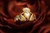 Claghdah ring (abbigail may) Tags: rose hands crown heart gold love galway ireland macromondays souvenir weddingring