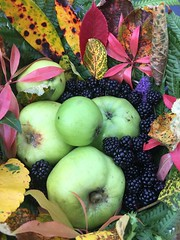 Bye bye Autumn 2017 (staceygallagher2) Tags: ireland flowers plants colours leaves leaf autumnleaves fruit berries berry scenic nature autumn