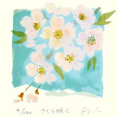 Cherry (Japanese Flower and Bird Art) Tags: flower cherry prunus rosaceae yoh ito modern screenprint print japan japanese art readercollection
