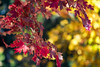 most beautiful time ... (mariola aga) Tags: autumn fall park tree branch leaves seasonchange colors bokeh coth coth5