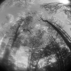 Fisheye Fall (GR167) Tags: bw landscape jaggr blackandwhite olloclip