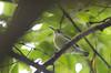 Purple-rumped sunbird female (as_kannan) Tags: yelagiri tamilbirdersmeet leptocomazeylonica nectariniidae