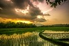 rice fields, mountain and sunset (urban67) Tags: landscape canon wide sunset canon60d field mountain bestcapturesaoi