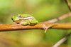 Peaceful Slumber (Explored) (dianne_stankiewicz) Tags: frog
