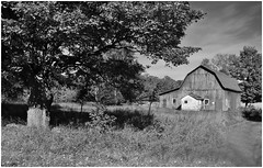 Reminiscence (Sun~Lover) Tags: wisconsin doorcounty autumn fall leaves barn oak oaktree nostalgia reminiscent homecoming blackandwhite red explore 2017