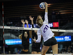 UW USC-FT4I8605 (Pacific Northwest Volleyball Photography) Tags: volleyball ncaa washington usc uwhuskies seattle pac12 pac12vb