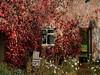 (yvonnepay615) Tags: panasonic lumix gh4 autumn blicklinghall norfolk eastanglia uk coth coth5