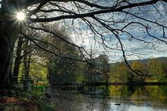 Hersbststimmung am See (Ruinenvogel) Tags: autumn laub baum hdr herbst herbstzauber see sonne sun