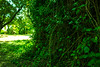 Green Plants (Chriskrastev) Tags: green plants photography mallorca amazing view sunny shades canon dslr example