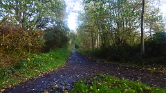 Silkstone - Wath old railway    October 2017 (dave_attrill) Tags: great central railway electrified woodhead sheffield victoria manchester picadilly closed 1970 1955 stocksbridge engine transpennine upper don trail penistone wortley wadsley neepsend dunford bridge thurgoland tunnel oxspring barnsley junction huddersfield allweather cycleway bridleway footpath remains silkstone 2016 1981 dove valley no1