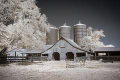 Rural Farm Infrared (Notley Hawkins) Tags: httpwwwnotleyhawkinscom notleyhawkinsphotography notley notleyhawkins 10thavenue clouds rural 2017 september ir infrared callawaycountymissouri hattonmissouri barn farm silo grainsilos bucolic