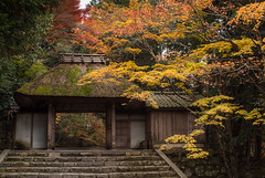 The gateway to Honen-in (Tim Ravenscroft) Tags: honenin gateway thatch autumn fall colour kyoto japan