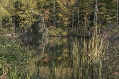 Summit Lake State Park (will139) Tags: summitelakestatepark parks stateparks indiana