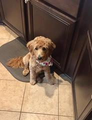 Kasey's sweet girl Charlie!