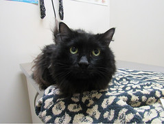Slorg - 6 year old neutered male