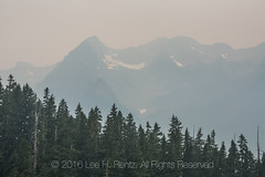 Thick Forest Fire Smoke in Olympic National Park (Lee Rentz) Tags: hoh hohrainforest hohriver hohrivertrail olympicmountains olympicnationalpark olympicpeninsula pacificnorthwest washington washingtonstate america forestfire gray hike hiking landscape low nature northamerica northwest obscured peaks poor smody smoke smoky unitedstates usa visibility wild wildfire